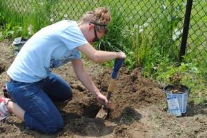 Planting Berries - Amanda